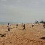 Coconut Palm Planting