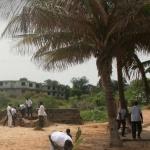 Coconut Palm Planting 2