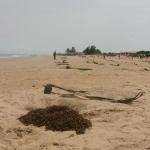 Coconut Palm Planting 3