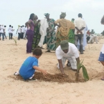 Coconut Palm Planting 5