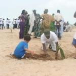 Coconut Palm Planting 5