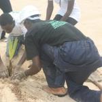 Coconut Palm Planting 6