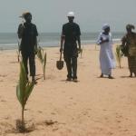 Coconut Palm Planting 7