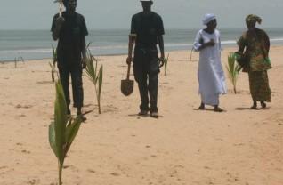 Coconut-Palm-Planting-27-l